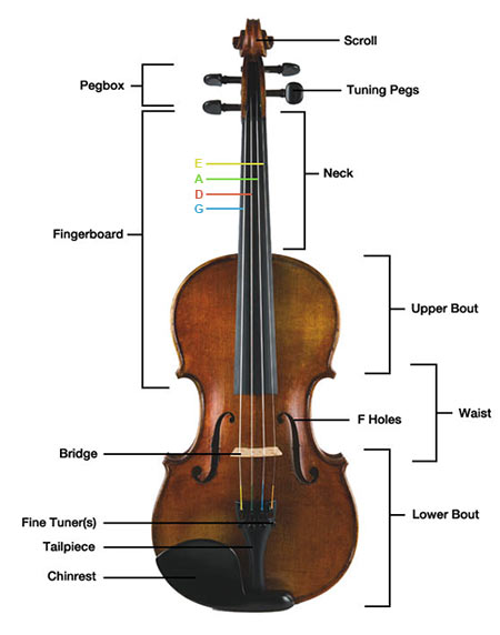 parts of the violin