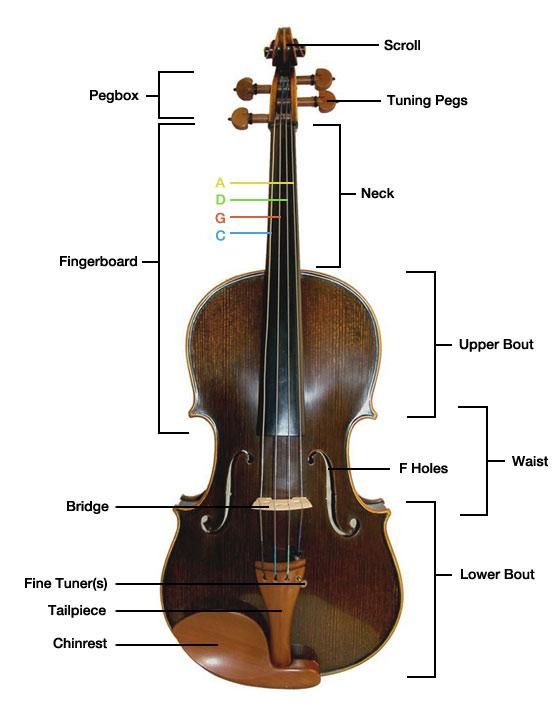 Parts of the Viola - Get-Tuned.com
